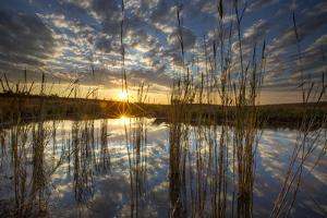 Clouds Reflected on a Pond in the Okavango Delta by Cory Richards