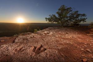 Theropod Tracks Cross Flag Point Near Kanab by Cory Richards