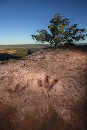 Theropod tracks cross Flag Point near Kanab. by Cory Richards