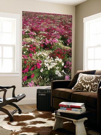 https://imgc.artprintimages.com/img/print/cosmos-flower-on-willamette-valley-oregon-usa_u-l-pif50h0.jpg?p=0
