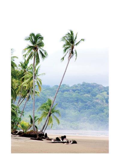 Costa Rica Palms-Shane Settle-Art Print