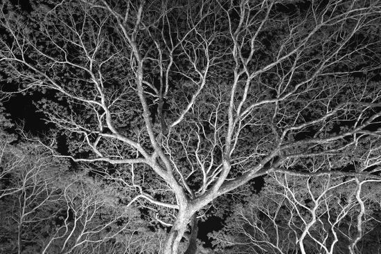 Costa Rica Tree-Moises Levy-Photographic Print