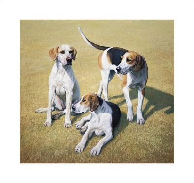 Cotswold Foxhounds-Gary Stinton-Collectable Print