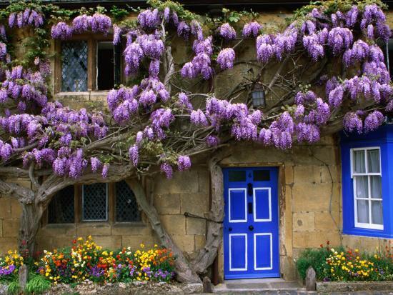 Cottage with Wisteria in Flower, Broadway, United Kingdom-Barbara Van Zanten-Photographic Print