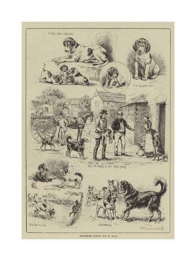 Cottesmore Puppies Put to Walk-S^t^ Dadd-Giclee Print