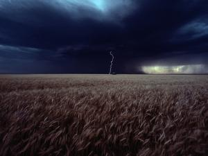 Lightning Flashes Above a Kansas Wheat Field by Cotton Coulson