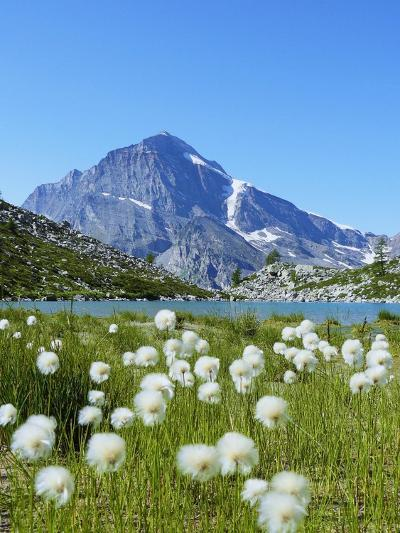Cotton Grass and Monte Leone-Fabio Bianchi Photography-Photographic Print