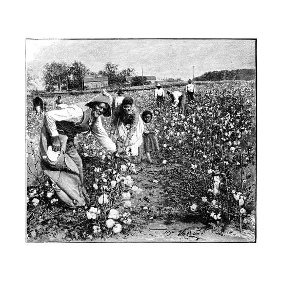 Cotton Industry, Early 20th Century-Science Photo Library-Giclee Print