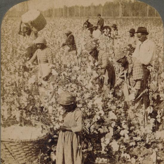 'Cotton is king - plantation scene with pickers at work. Georgia', c1900-Unknown-Photographic Print