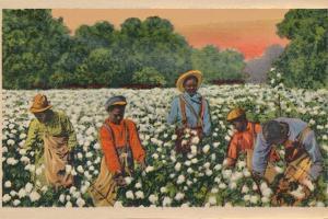 Cotton Picking, Augusta, Georgia, 1943