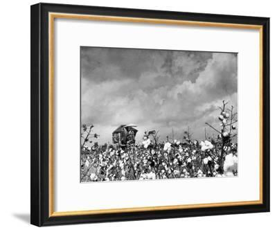 Cotton Picking Machine Doing the Work of 25 Field Hands on Large Farm in the South-Margaret Bourke-White-Framed Premium Photographic Print