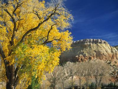 Cottonwood, Rio Arriba County, New Mexico, USA-Michael Snell-Photographic Print