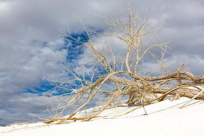 Cottonwood Tree on White Dune in White Sands National Monument-Derek Von Briesen-Photographic Print
