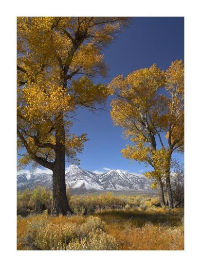Cottonwood with the Carson Range in the background, Nevada-Tim Fitzharris-Art Print