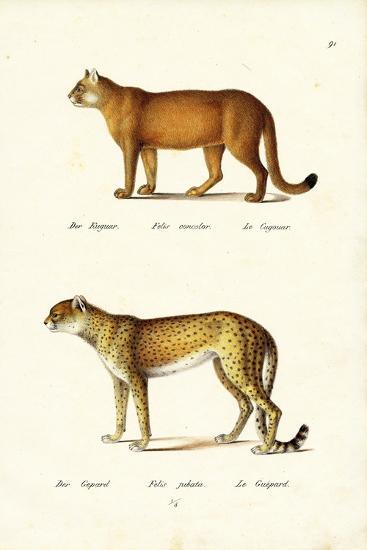 Cougar, 1824-Karl Joseph Brodtmann-Giclee Print
