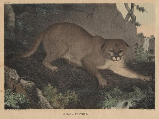 Cougar or Panther-Mannevillette Elihu Dearing Brown-Giclee Print