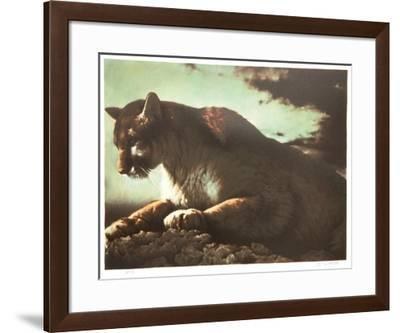 Cougar-Nancy Glazier-Framed Collectable Print