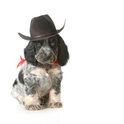 https://imgc.artprintimages.com/img/print/country-dog-english-cocker-spaniel-puppy-wearing-western-hat-isolated-on-white-background_u-l-q1034fy0.jpg?p=0
