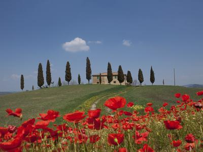 Country Home and Poppies, Near Pienza, Tuscany, Italy, Europe-Angelo Cavalli-Photographic Print