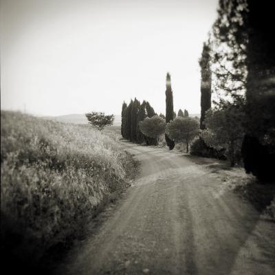 Country Lane with Cypress Trees in Early Morning Sunlight, San Quirico D'Orcia, Tuscany, Italy-Lee Frost-Photographic Print