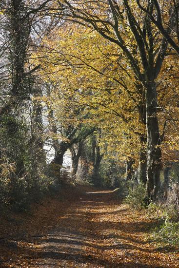 Country Road in Autumn, Hanson, Kornelimunster, Nordrhein-Westfalen, Germany-Florian Monheim-Photographic Print