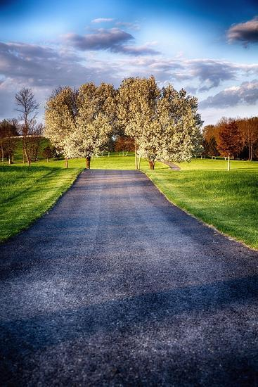 Country Road With Blooming Trees, New Jersey-George Oze-Photographic Print