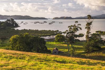 Countryside at Coromandel Town, Coromandel Peninsula, North Island, New Zealand, Pacific-Matthew Williams-Ellis-Photographic Print