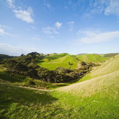 Countryside on the Walk to Wharariki Beach-Matthew Williams-Ellis-Photographic Print