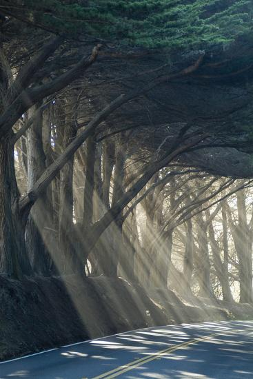 County Road with Sunlight Filtering in Through the Trees, Mendocino, California, Usa-Natalie Tepper-Photo