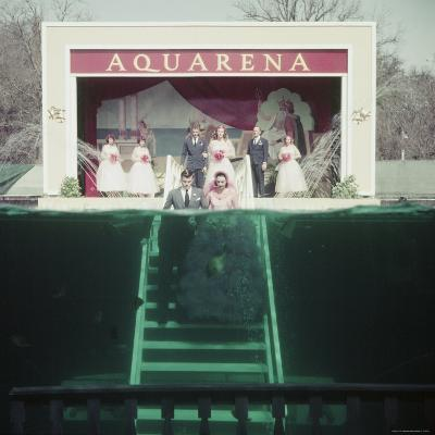 Couple Getting Married Underwater at Aquarena-John Dominis-Photographic Print