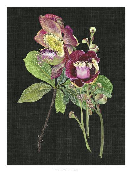 Couroupita Guianensis II-Melissa Wang-Giclee Print