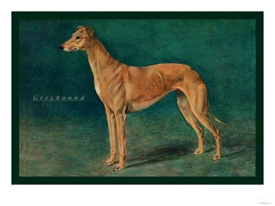Coursing Greyhound--Art Print