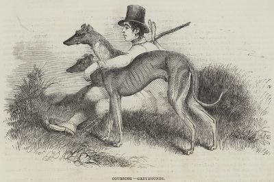 Coursing, Greyhounds--Giclee Print
