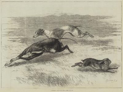 Coursing, the First Turn--Giclee Print