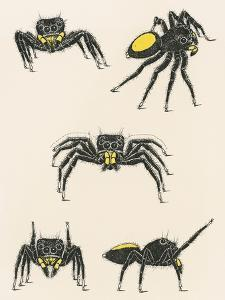 Courtship of the Male Spider of the Corythalia Xanthopa Species, Salticidae