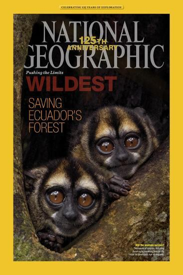 Cover of the January, 2013 National Geographic Magazine-Tim Laman-Photographic Print