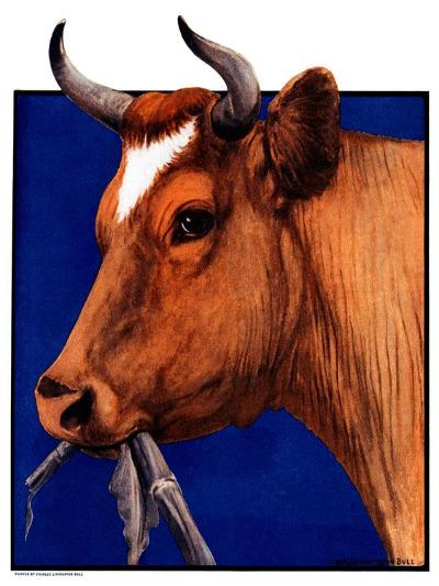 """Cow Chewing Corn Stalk,""November 17, 1923-Charles Bull-Giclee Print"