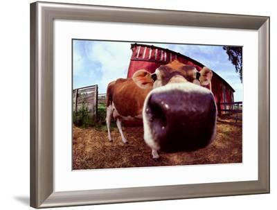 Cow in Barnyard-DLILLC-Framed Photographic Print