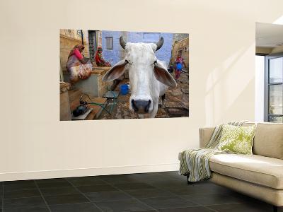 Cow on Street Inside Fort Walls-Johnny Haglund-Wall Mural