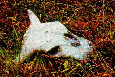 Cow Skull-Andr? Burian-Photographic Print