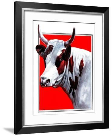 Cow Still 1-The Saturday Evening Post-Framed Giclee Print