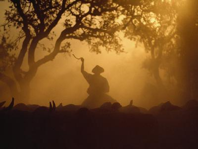 Cowboy and Cattle Silhouetted Against the Setting Sun-Joel Sartore-Photographic Print