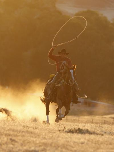 Cowboy Galloping While Swinging a Rope Lassoo at Sunset, Flitner Ranch, Shell, Wyoming, USA-Carol Walker-Photographic Print