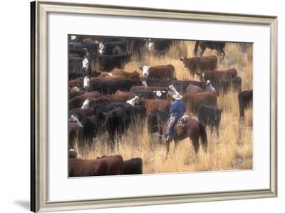 Cowboy Herding Cattle in the Sierras of California Near Bridgeport-John Alves-Framed Photographic Print