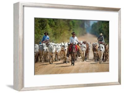Cowboy Herding Cattle, Pantanal Wetlands, Brazil