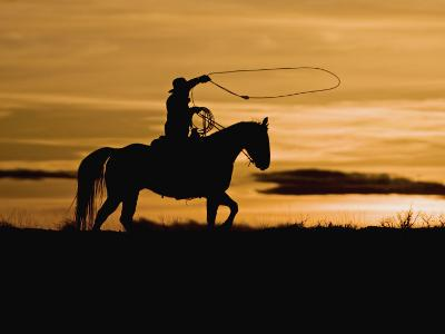 Cowboy on Horses on Hideout Ranch, Shell, Wyoming, USA-Joe Restuccia III-Photographic Print