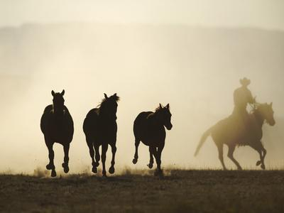 https://imgc.artprintimages.com/img/print/cowboy-rounding-up-three-horses_u-l-pzrkyv0.jpg?p=0