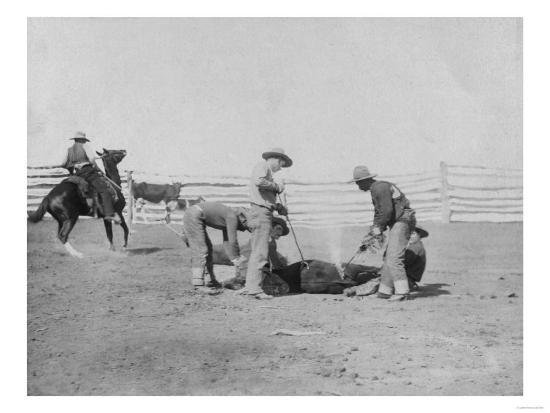 Cowboys Branding a Calf Photograph - South Dakota-Lantern Press-Art Print