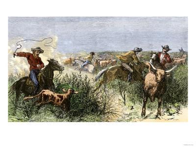 Cowboys Cutting Out Cattle to Drive a Herd from Texas to Kansas, c.1870--Giclee Print