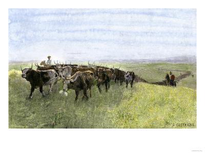 Cowboys Driving a Longhorn Herd on the Great Cattle Trail 1800--Giclee Print